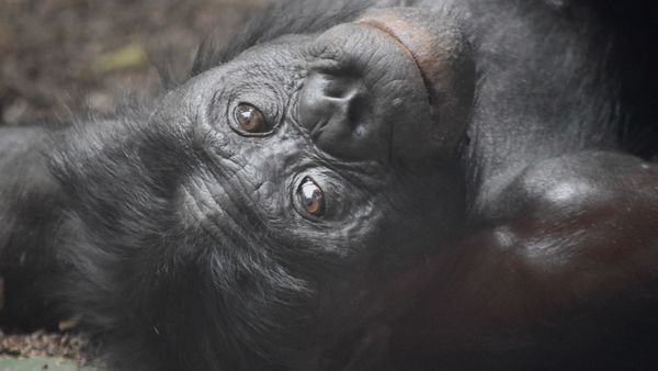 What can a bonobo teach a hedge fund manager?